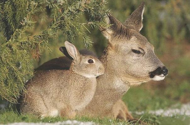 perierga.gr - Ολόιδια ζώα από διαφορετικές... ράτσες!