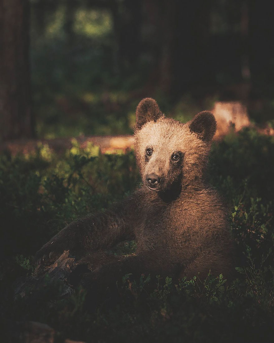 perierga.gr - Φωτογραφίζοντας άγρια ζώα από πολύ κοντά!