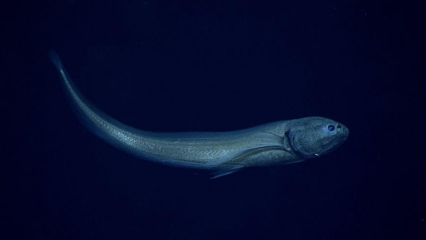 perierga.gr - Mυστηριώδη πλάσματα που βρέθηκαν στους ωκεανούς!