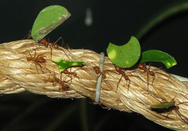 perierga.gr - Τα μυρμήγκια ήταν οι πρώτοι γεωργοί...