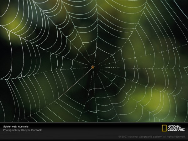 perierga.gr - Πώς αλλάζει ο ιστός μιας αράχνης που βρίσκεται υπό την επήρεια ναρκωτικών;