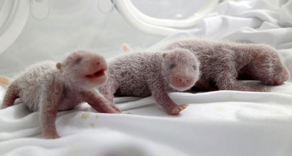 perierga.gr - Τα μωρά πάντα ζυγίζουν μόλις 100 γραμμάρια!