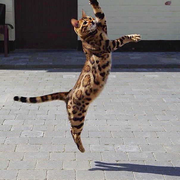 perierga.gr - Γάτα μοιάζει με τίγρη!