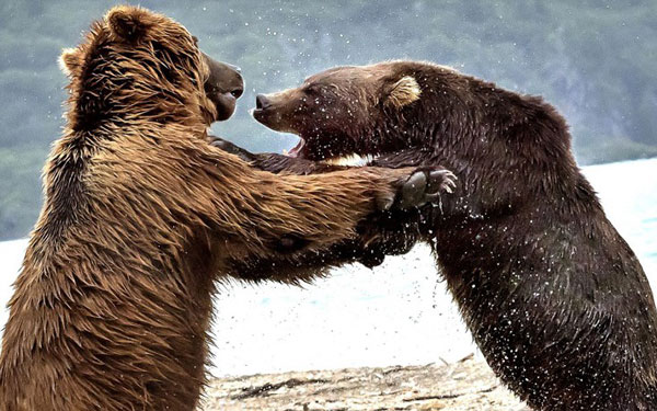 perierga.gr - Η μάχη των «τιτάνων» στη Ρωσία!