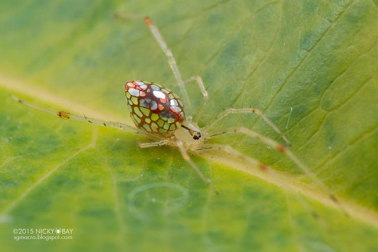 perierga.gr - Αράχνη... καθρέφτης στο φακό του φωτογράφου!