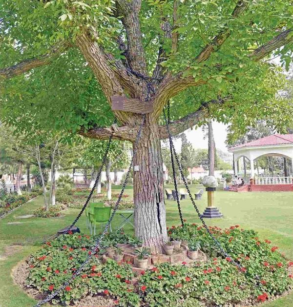 perierga.gr - Το δέντρο που... συνελήφθη!
