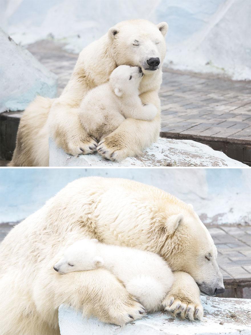 perierga.gr - Αξιαγάπητες αρκούδες με τα μωρά τους!
