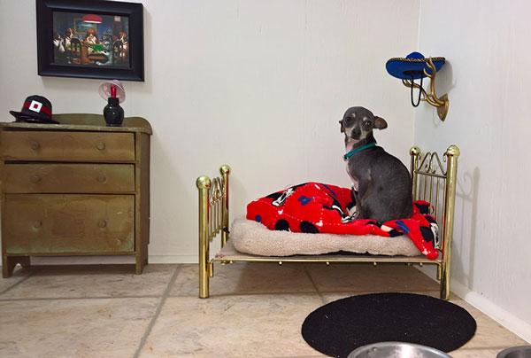 perierga.gr - Πολυτελής κρεβατοκάμαρα για τον σκύλο της!
