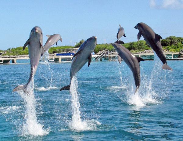 Γιατί τα δελφίνια πηδάνε έξω από το νερό;