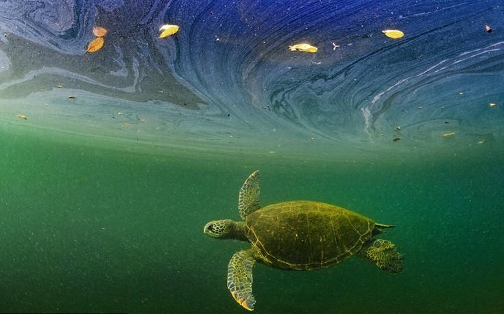 perierga.gr - Ο θαυμαστός υποβρύχιος κόσμος των νησιών Γκαλαπάγκος!