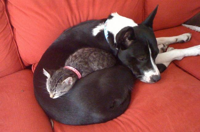 perierga.gr - Γάτες με μεγάλη αδυναμία στους... σκύλους!