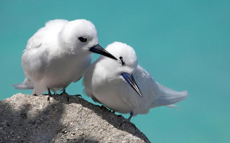 perierga.gr - Το υπέροχο Εθνικό Θαλάσσιο Μνημείο της Χαβάης!