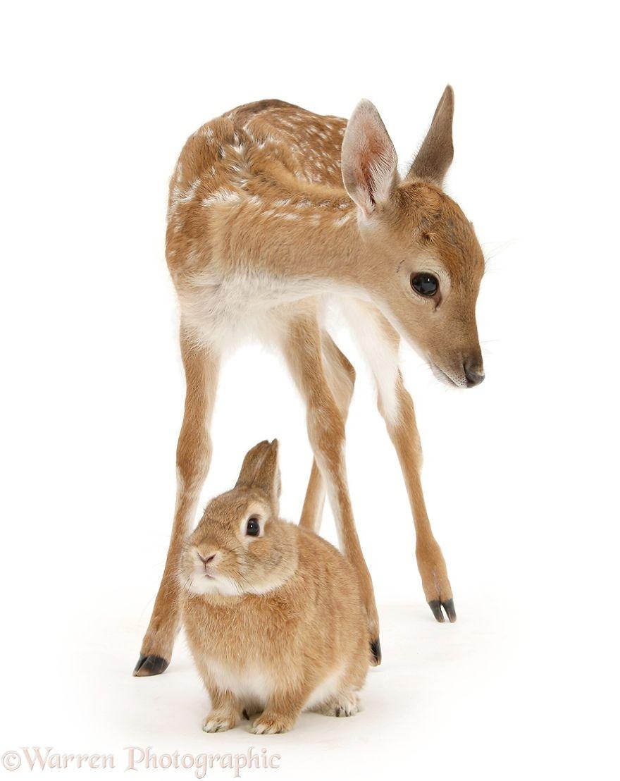 perierga.gr - Ολόιδια ζώα από... διαφορετικά είδη!