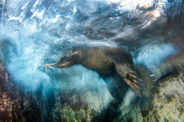 Perierga.gr-Οι καλύτερες φωτογραφίες άγριας ζωής για το 2016