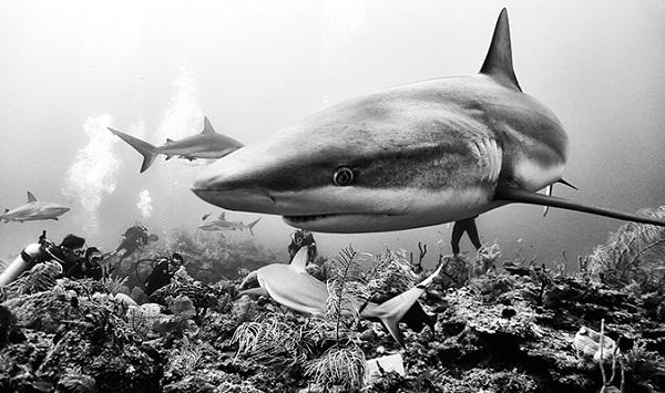 perierga.gr - Η άγρια... ασπρόμαυρη ομορφιά των ωκεανών!