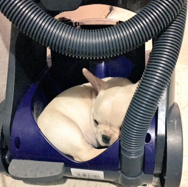 perierga.gr - Αξιαγάπητα σκυλιά κοιμούνται παντού!