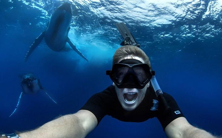 perierga.gr - Migaloo: Η σπάνια λευκή φάλαινα της Αυστραλίας!