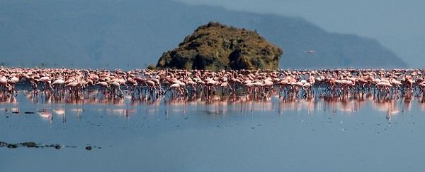 perierga.gr - Πώς μια τοξική λίμνη έγινε ιδανικός βιότοπος για τα φλαμίνγκο;