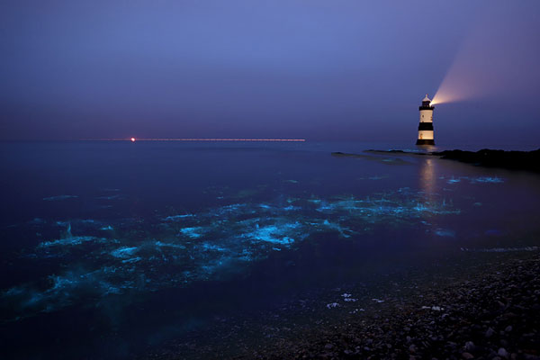 perierga.gr- Η θάλασσα των... αστεριών!