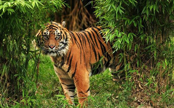 Perierga.gr-Κατά 95% έχουν μειωθεί τα άγρια ζώα μέσα σε 100 χρόνια
