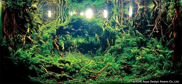 perierga.gr - Φυτά σε ενυδρεία... κλέβουν τις εντυπώσεις!