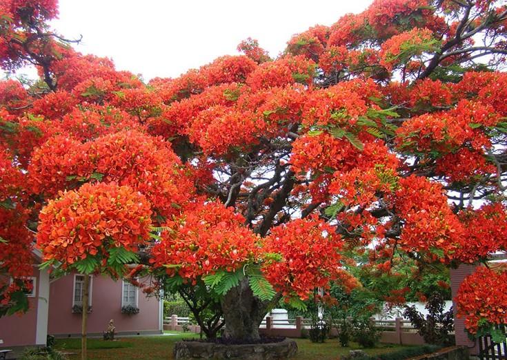 Τα ωραιότερα δέντρα στον κόσμο!