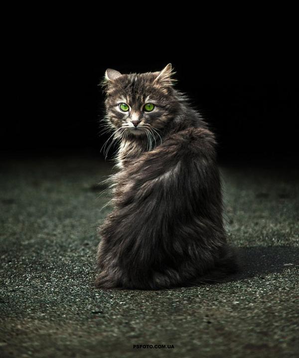 Perierga.gr-Ζώα ποζάρουν στο φακό του Sergey Polyushko