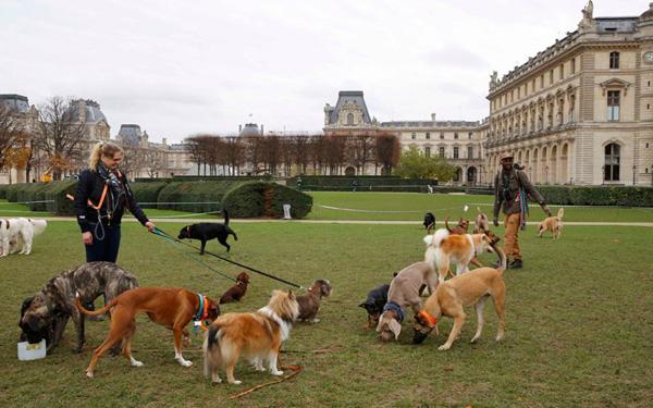 Perierga.gr-Νέα στοιχεία για τη μνήμη των σκύλων