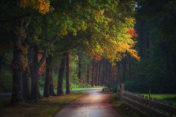 Perierga.gr-Εκπληκτικές φωτογραφίες από τα πανέμορφα δάση της Ολλανδίας