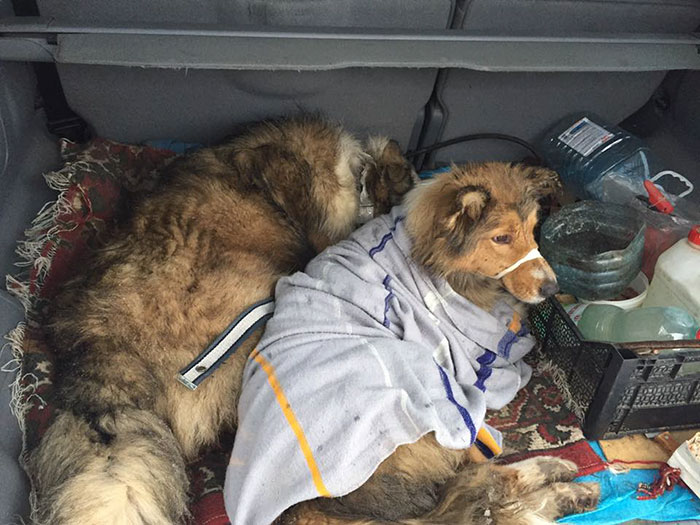 perierga.gr - Η δύναμη της αγάπης με πρωταγωνιστές 2 σκύλους!