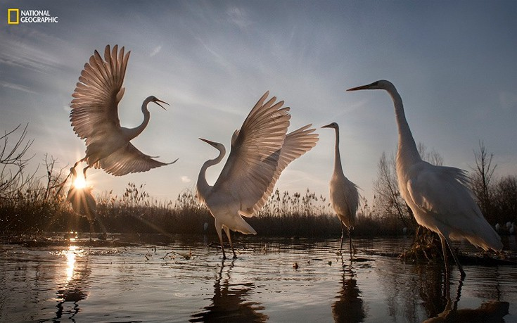 perierga.gr - Βραβευμένες φωτογραφίες του National Geographic 2016