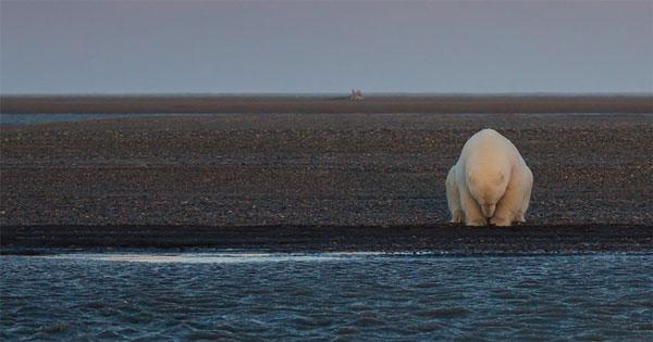 perierga.gr - Οι ολέθριες επιπτώσεις της υπερθέρμανσης του πλανήτη!
