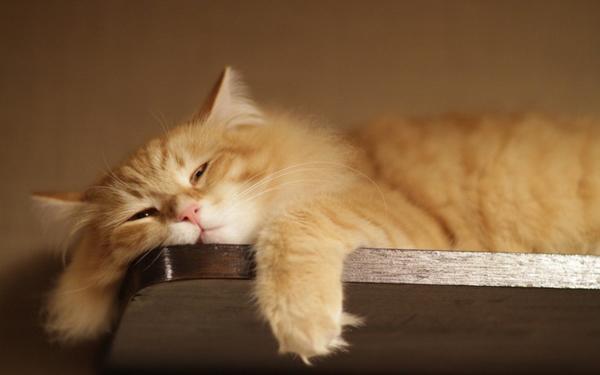 Perierga.gr-Η μελέτη που ανατρέπει τα δεδομένα για τις γάτες και την εξυπνάδα
