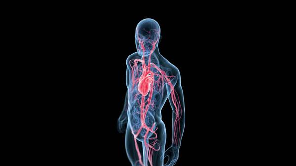Perierga.gr-Ένα επιλπέον όργανο στο ανθρώπινο σώμα ανακάλυψαν οι επιστήμονες