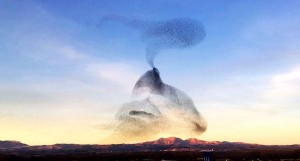 "perierga.gr - ""Μαγικό"" σύννεφο από ψαρόνια στον ουρανό!"