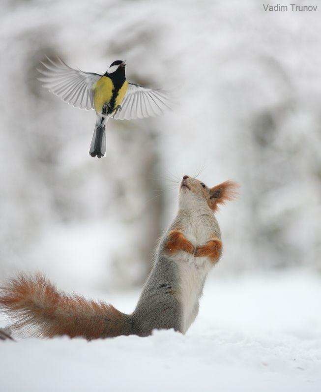 perierga.gr - Αξιαγάπητα σκιουράκια παίζουν στο χιόνι!