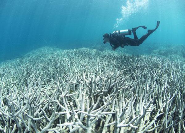 Perierga.gr-Εδώ και 65 χρόνια οι ωκεανοί γίνονται όλο και πιο θερμοί