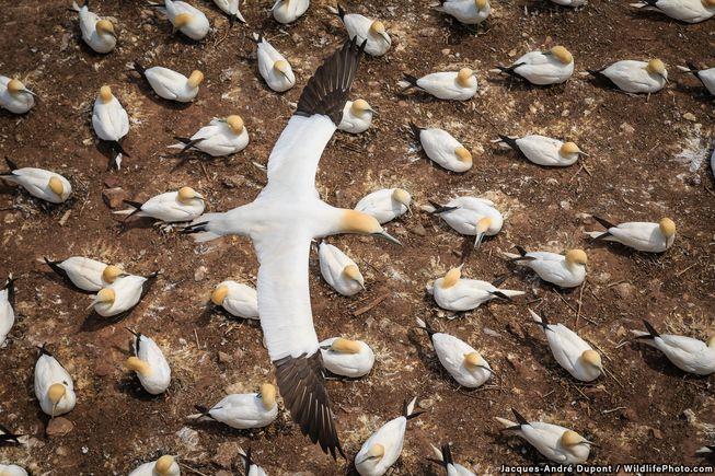 perierga.gr - Φωτογραφίες της άγριας ζωής συλλαμβάνουν όλο το μεγαλείο της φύσης!