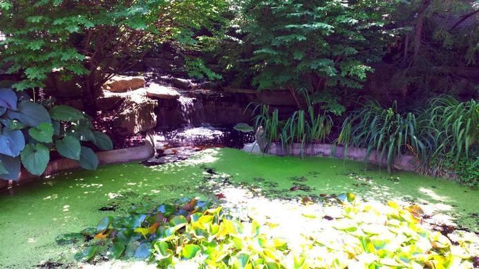 perierga.gr - Κήπος με 100 φυτά από τους βιβλικούς χρόνους
