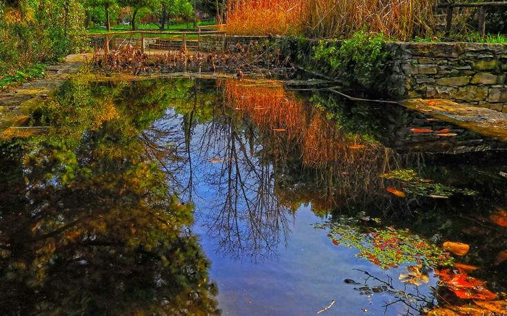 perierga.gr - Ο μεγαλύτερος βοτανικός κήπος της Ανατολικής Μεσογείου βρίσκεται στην Αττική!