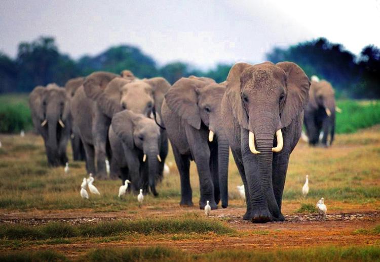 Perierga.gr - Οι ελέφαντες είναι... ξενύχτηδες - Κοιμούνται μόνο 2 ώρες την ημέρα