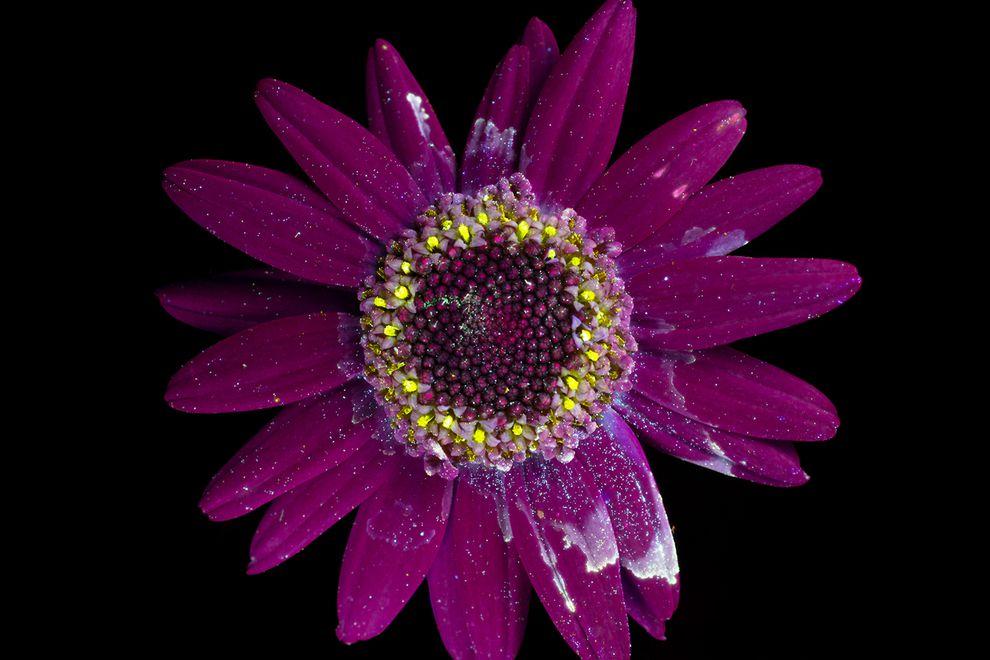 perierga.gr - Λουλούδια λάμπουν στο σκοτάδι!