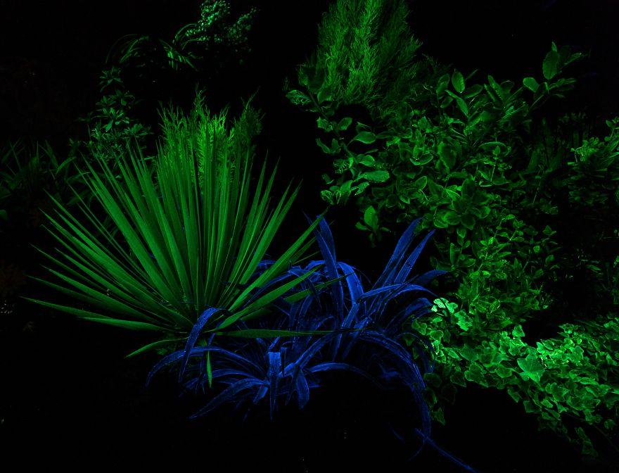 perierga.gr - Λουλούδια λάμπουν στο σκοτάδι δημιουργώντας απόκοσμες εικόνες!
