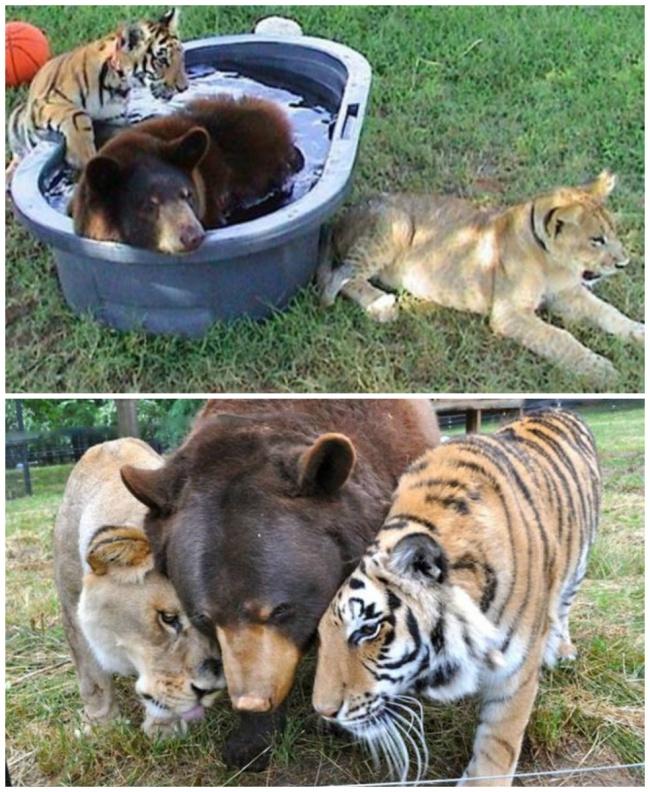 perierga.gr - Αξιαγάπητα ζώα που μεγάλωσαν μαζί!