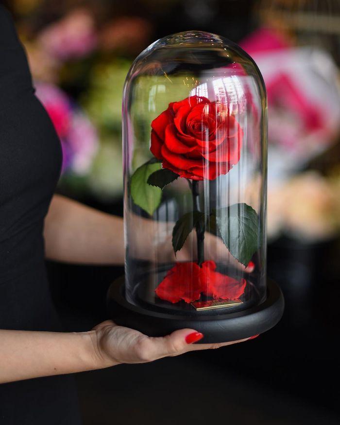 perierga.gr - Πανέμορφα τριαντάφυλλα διατηρούνται για... πάντα!