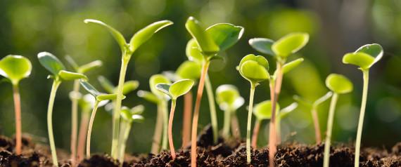 perierga.gr - Τα φυτά ξέρουν πότε κάποιος τρώει το φύλλωμά τους και... αμύνονται!