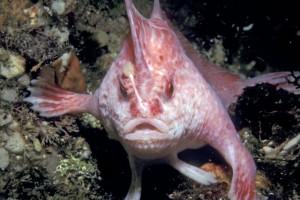 Παράξενα ψάρια με... χέρια περπατάνε στο βυθό!