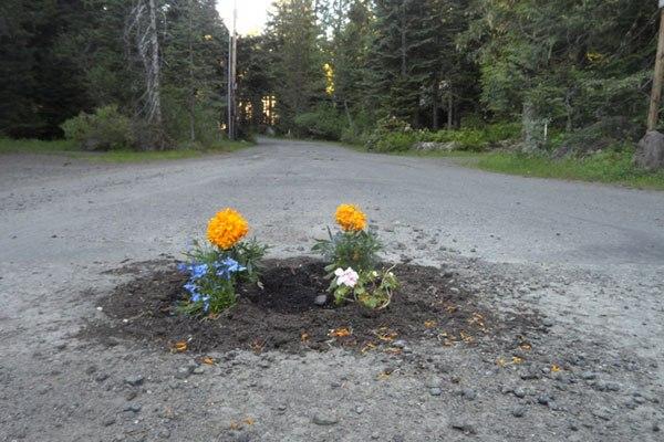 perierga.gr - Οι κάτοικοι φυτεύουν λουλούδια στις λακκούβες των δρόμων!