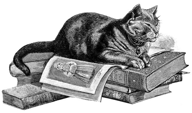 perierga.gr - Η παράξενη ιστορία της γάτας που υπέγραψε μια διατριβή!