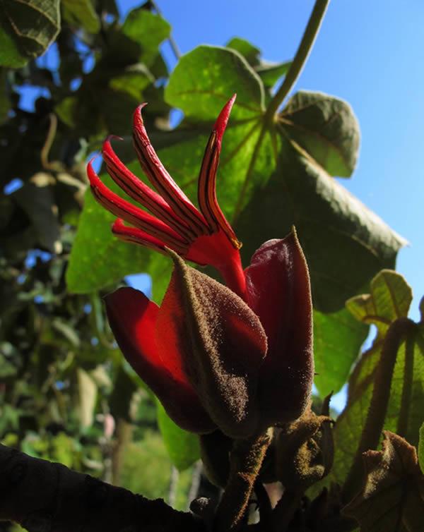 perierga.gr - Τα χέρια του Διαβόλου: Ένα παράξενο φυτό!
